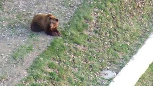 VIDEO SOCANT! Mutilat de un urs, dupa ce a sarit in tarcul animalului! - Imaginea 6