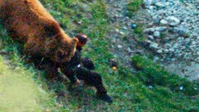VIDEO SOCANT! Mutilat de un urs, dupa ce a sarit in tarcul animalului! - Imaginea 5