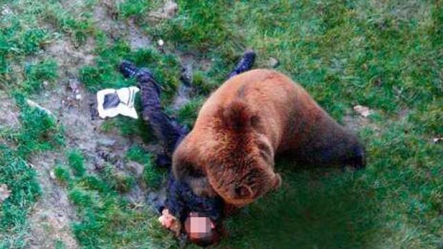 VIDEO SOCANT! Mutilat de un urs, dupa ce a sarit in tarcul animalului! - Imaginea 4