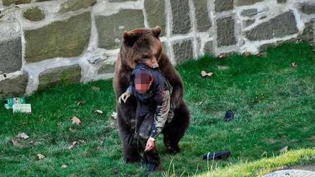 VIDEO SOCANT! Mutilat de un urs, dupa ce a sarit in tarcul animalului! - Imaginea 1