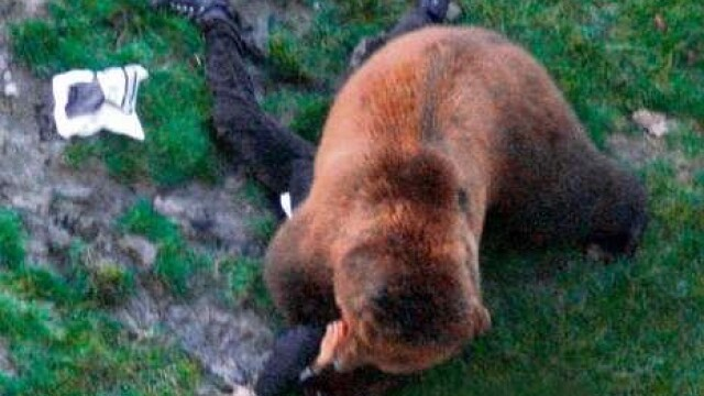 VIDEO SOCANT! Mutilat de un urs, dupa ce a sarit in tarcul animalului! - Imaginea 3