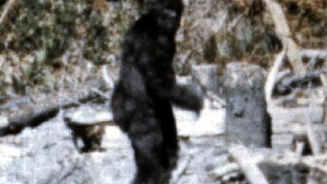 Un om de stiinta american spune ca a studiat ADN-ul lui Bigfoot. \