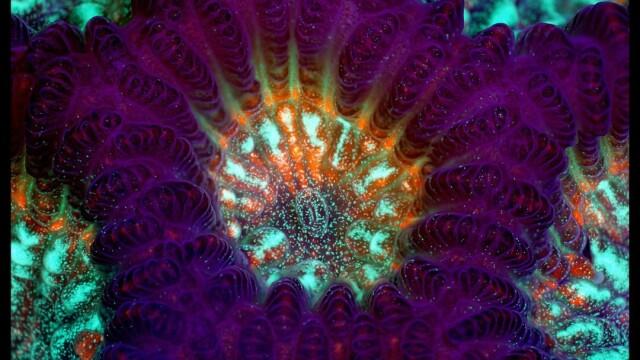Viata uimitoare care se afla sub microscop. FOTOGRAFII ale unei lumi nevazute cu ochiul liber - Imaginea 1