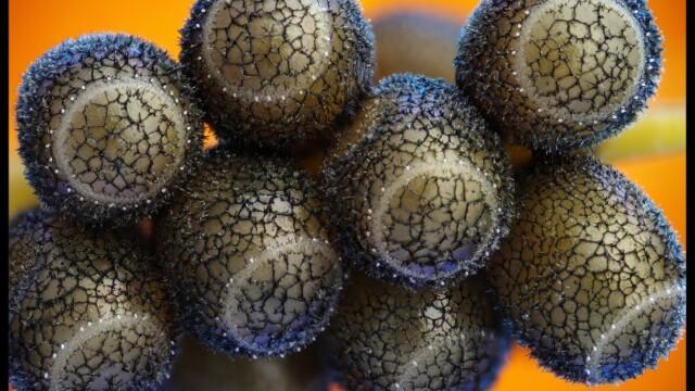 Viata uimitoare care se afla sub microscop. FOTOGRAFII ale unei lumi nevazute cu ochiul liber - Imaginea 2