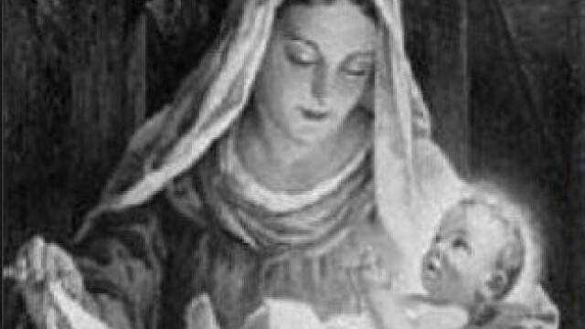 Un barbat sustine ca imaginea Fecioarei Maria a aparut pe trunchiul unui copac. FOTO