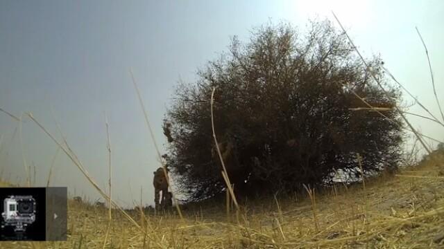 A lasat din greseala o camera GoPro in salbaticie. Cand s-a intors dupa ea, a ras cu lacrimi. VIDEO