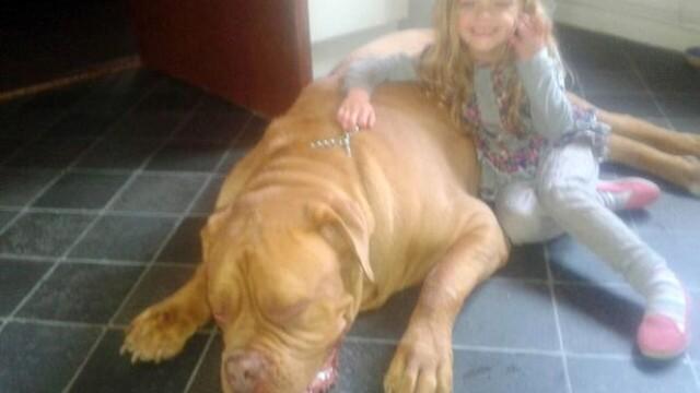 O fetita de 4 ani din Marea Britanie, ucisa in somn de cainele pe care il adoptase familia sa