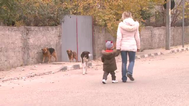 Barbat, la spital dupa ce a fost atacat de o haita de caini, in Timisoara