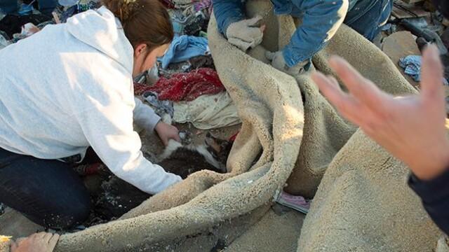 Povestea unei regasiri. Si-a salvat cainele pe care il credea mort de sub daramaturi, dupa o zi - Imaginea 3