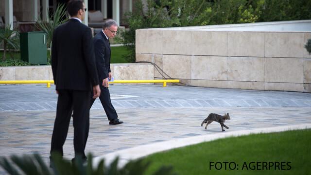 garzi Turcia pisici G20