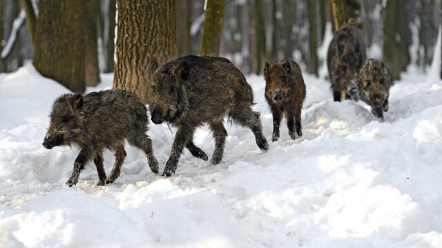 mistreti iarna - FOTO SHUTTERSTOCK
