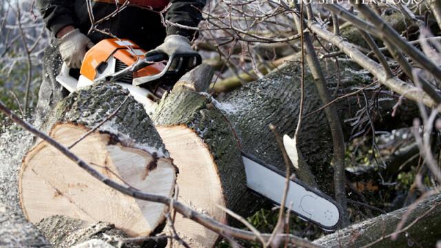 Doi jandarmi din Arges care faceau verificari in zona unei paduri, agresati de mai multi romi care se aflau la furat de lemne