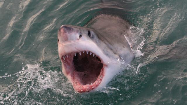 Tânăr de 20 de ani, atacat de un rechin în timp ce practica surfing. Starea victimei
