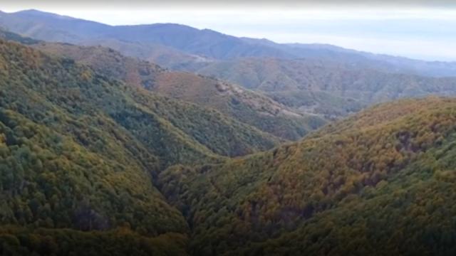 pădure fag România BBC