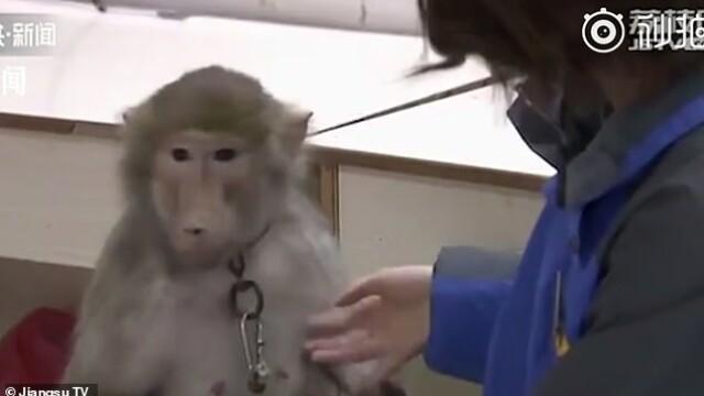 Imagini revoltătoare într-o grădină zoologică. La ce chinuri a fost supusă o maimuță VIDEO