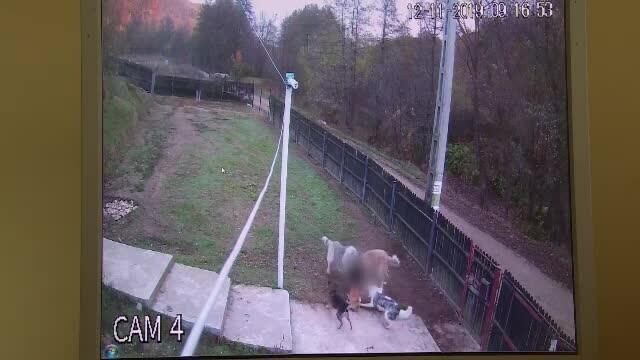 Trei câini ciobănești au sărit gardul și au sfâșiat cățelușa unei familii din Pitești