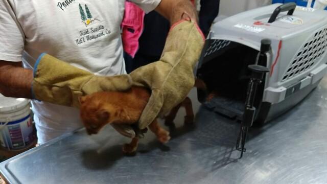 Ce era de fapt animalul pe care l-a adoptat o femeie, crezând că este un pui de pisică - Imaginea 3