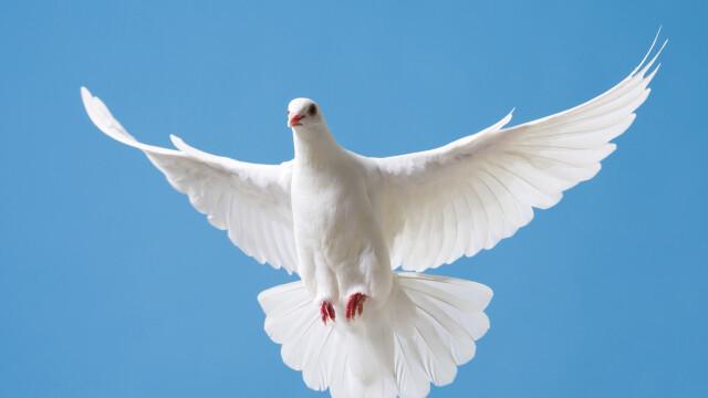 Record mondial: Un porumbel voiajor de viteză din Belgia, vândut cu 1,6 milioane de euro la o licitație online