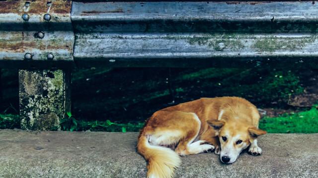 """Un câine, abandonat de o fetiță pe o bancă. Ce scria în biletul pe care l-a lăsat lângă el: """"Mă doare foarte tare"""""""