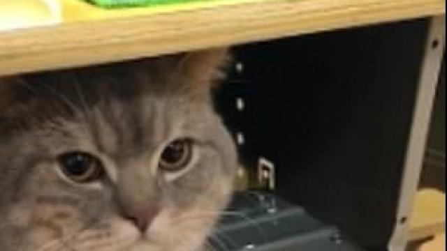 O elevă din China şi-a luat pisica la şcoală şi a ascuns-o în bancă. Ce a urmat. VIDEO