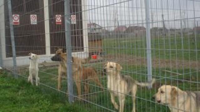Adapostul de canii de la Smeura este cel mai mare din lume