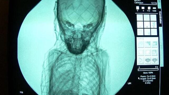 Mister vechi de aproape 3.500 de ani, dezlegat cu ajutorul unei radiografii. FOTO - Imaginea 2
