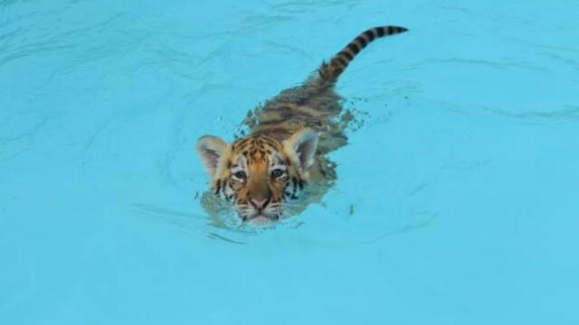 Multi ar ingheta de frica daca ar face asta. Alaturi de cine inoata aceasta fetita. GALERIE FOTO - Imaginea 2