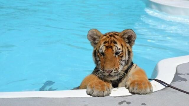 Multi ar ingheta de frica daca ar face asta. Alaturi de cine inoata aceasta fetita. GALERIE FOTO - Imaginea 3
