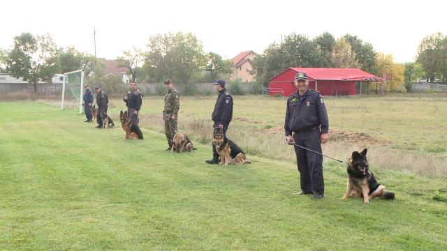 Ei sunt patrupezii politisti care vor porni pe urmele infractorilor din zona granitei de Vest. FOTO