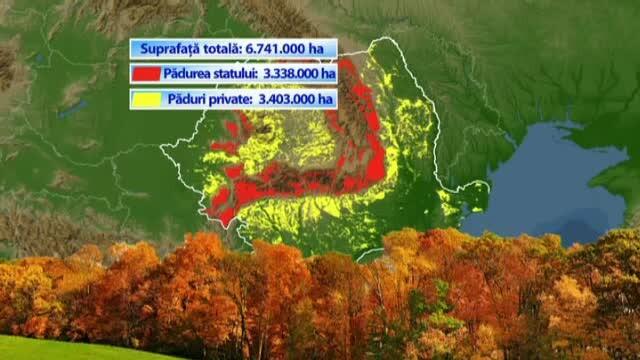Padurile Romaniei risca sa fie TAIATE fiindca nu-i atrag pe turisti. Doi parlamentari vor sa legalizeze