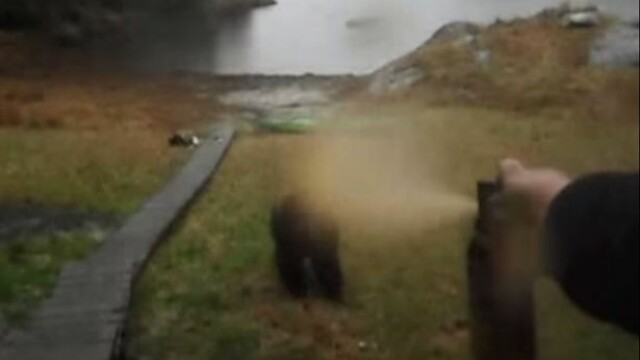 Ce se intampla cand ii dai unui urs in fata cu spray paralizant. Experienta infricosatoare a unei femei, in pustietate. VIDEO