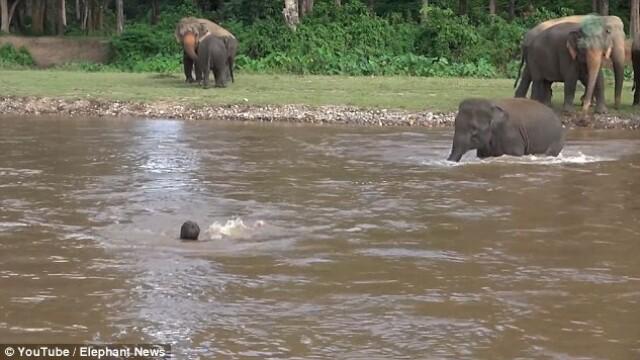 Cea mai emotionanta dovada de iubire. Cum a reactionat un pui de elefant cand a vazut ca ingrijitorul lui e in pericol. VIDEO
