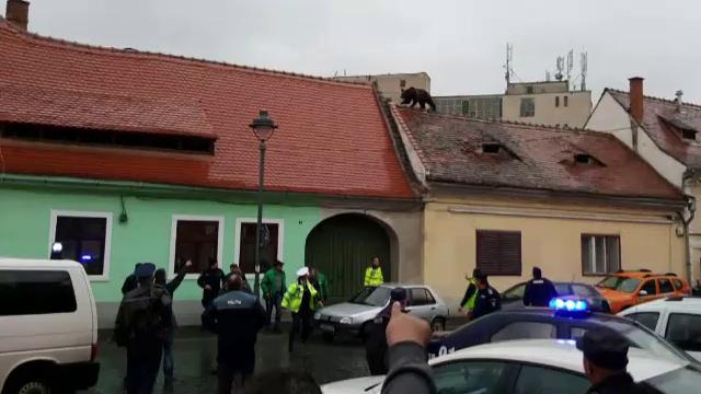 Seful Politiei Sibiu ar fi fost amenintat dupa uciderea ursului: