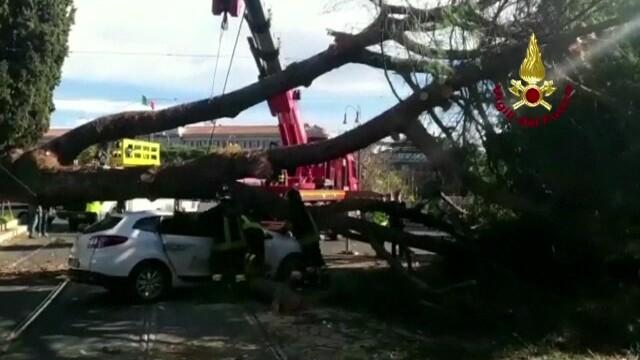 Copac cazut peste un taxi