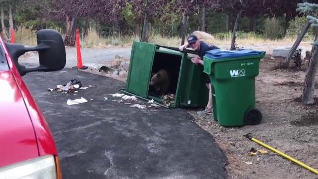 Trei pui de urs înfometați au rămas blocaţi într-o pubelă
