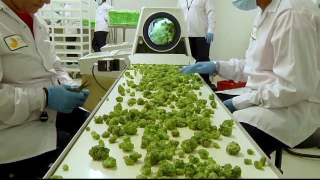 Cea mai mare țară care va legaliza marijuana. Produsul poate fi comandat de pe internet