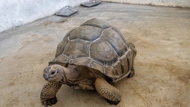 A murit ţestoasa născută odată cu Dimitrie Cantemir. Trăia în palat şi avea 2 servitori