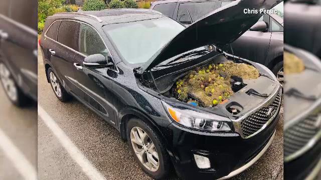 Descoperirea făcută de o femeie sub capota mașinii. Și-a dat seama când era deja în mers
