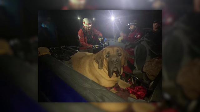 Un câine gigant a fost salvat de pe munte, după ce a leșinat din cauza oboselii - Imaginea 1