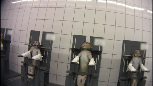 Imagini șocante într-un laborator din Germania. Maimuțe torturate în experimente - Imaginea 5