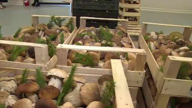 Seceta aduce și pagubă-n ciuperci. Din ce țări importăm ghebe pentru zacuscă