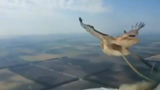 O pasăre a explodat în aer când a fost lovită de un avion. VIDEO