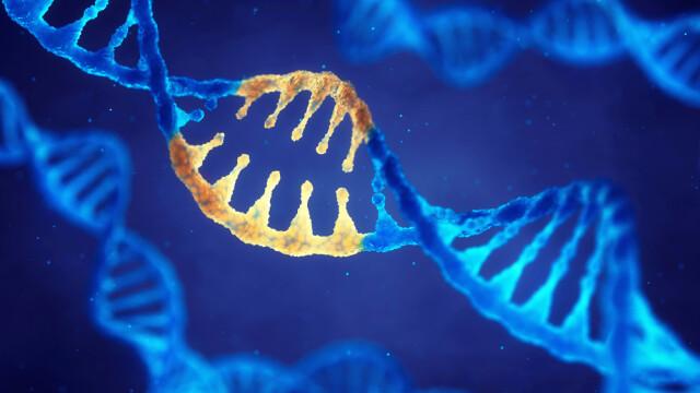 Gene moştenite de la omul de Neanderthal cresc riscul unei forme grave de COVID-19