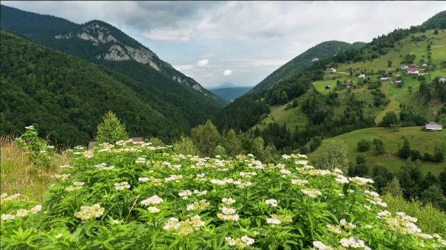 Zonele pitorești de care puțini români știu, ascunse între crestele Bucegilor şi Piatra Craiului