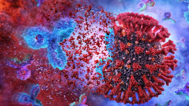 Studiu: Nivelul anticorpilor scade rapid după infectarea cu coronavirus