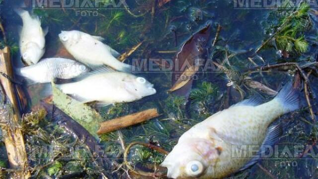 Mii de pesti morti pe un lac de la marginea orasului