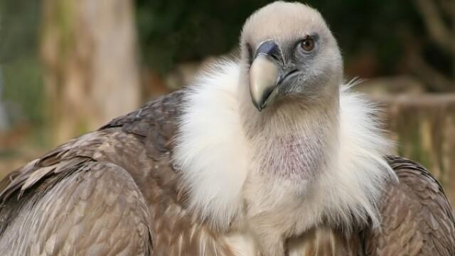 Vulturii vs angajatii televiziunii
