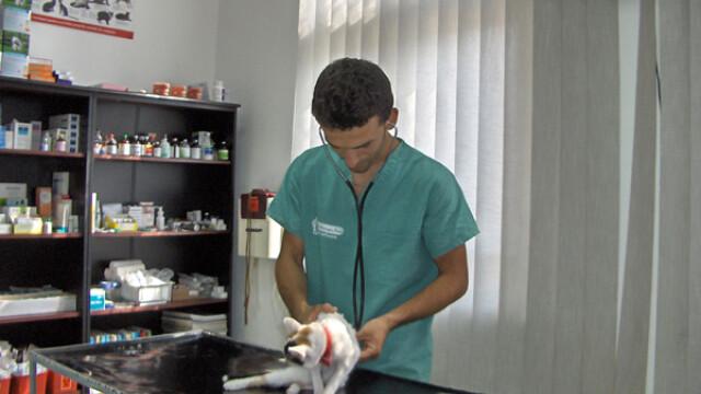 Sistemul sanitar veterinar este in pragul colapsului!