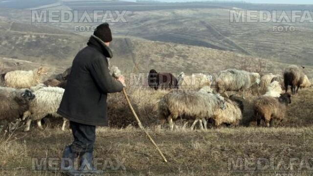 Transhumanta in vreme de criza: ciobanii pleaca in Vest. Fara mioare!