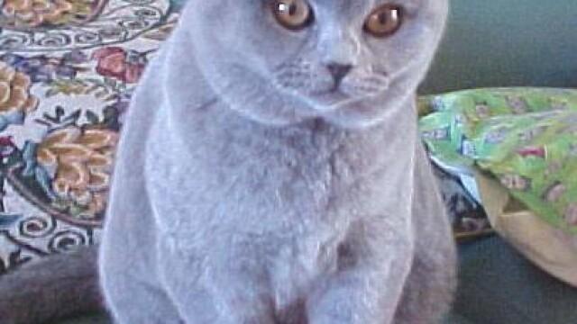 S-a gasit cheia prosperitatii in Japonia: pisicuta Tama